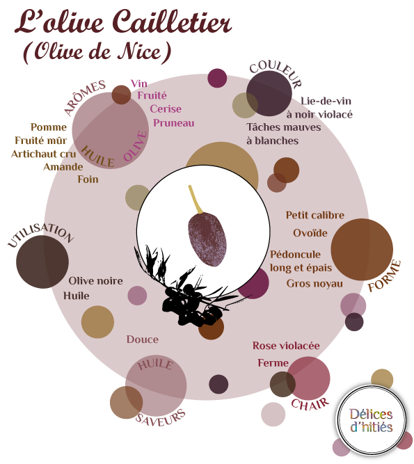 Infographie sur les caractéristiques de l'olive Cailletier