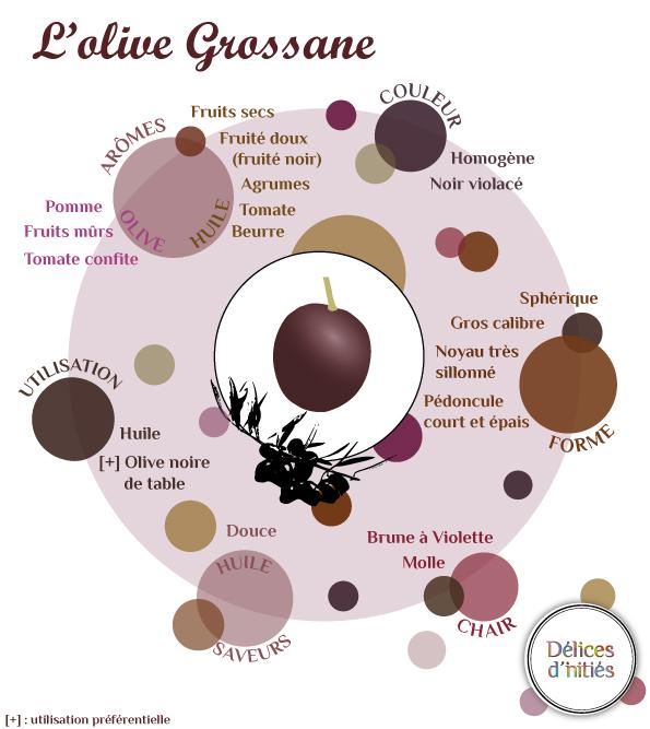 Infographie sur la variété d'olive Grossane