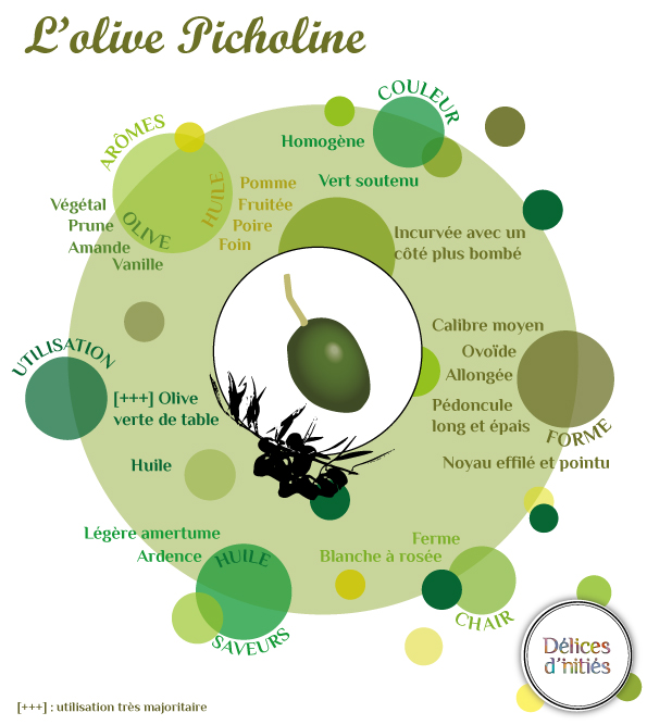 Infographie variété olive Picholine