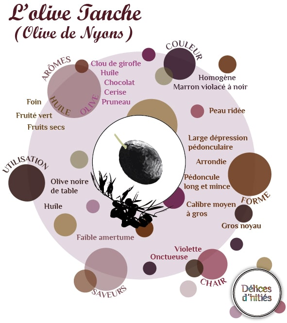 infographie olive tanche
